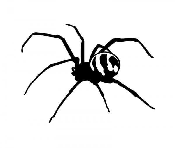Spinne KFZ Aufkleber konturgeschnitten in vielen Farben optional mit Wunschtext